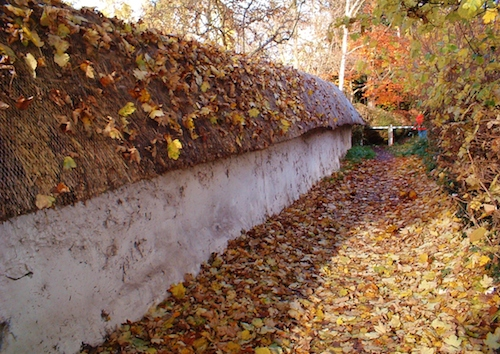 Cob Wall in the Autumn